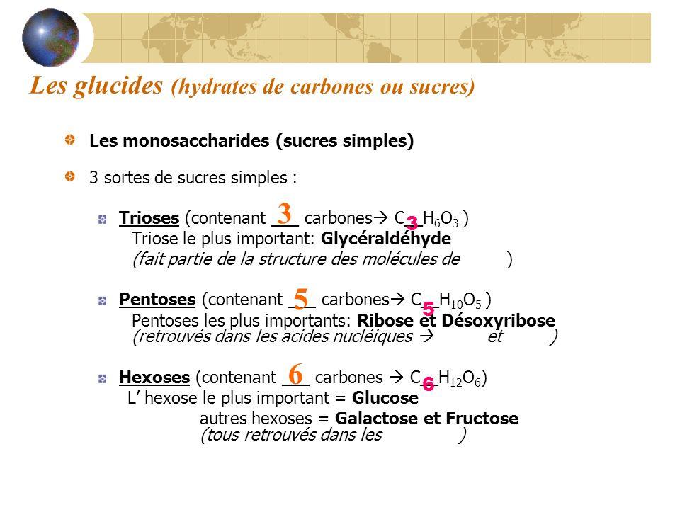 Les monosaccharides (sucres simples) 3 sortes de sucres simples : Trioses (contenant ___ carbones C__H 6 O 3 ) Triose le plus important: Glycéraldéhyd