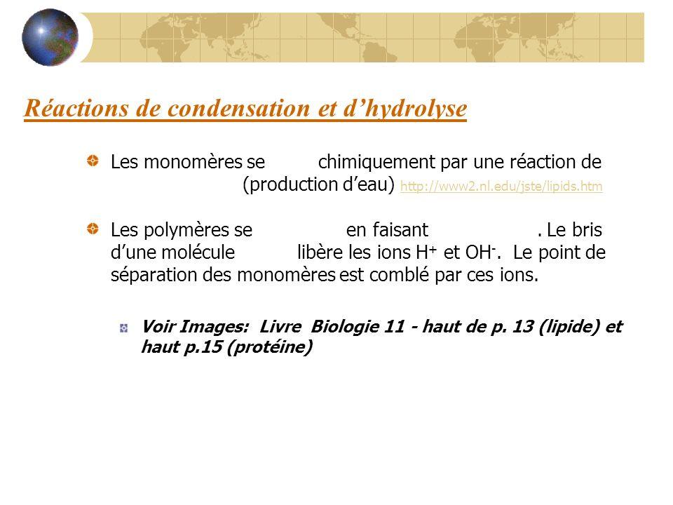 Réactions de condensation et dhydrolyse Les monomères se lient chimiquement par une réaction de condensation (production deau) http://www2.nl.edu/jste