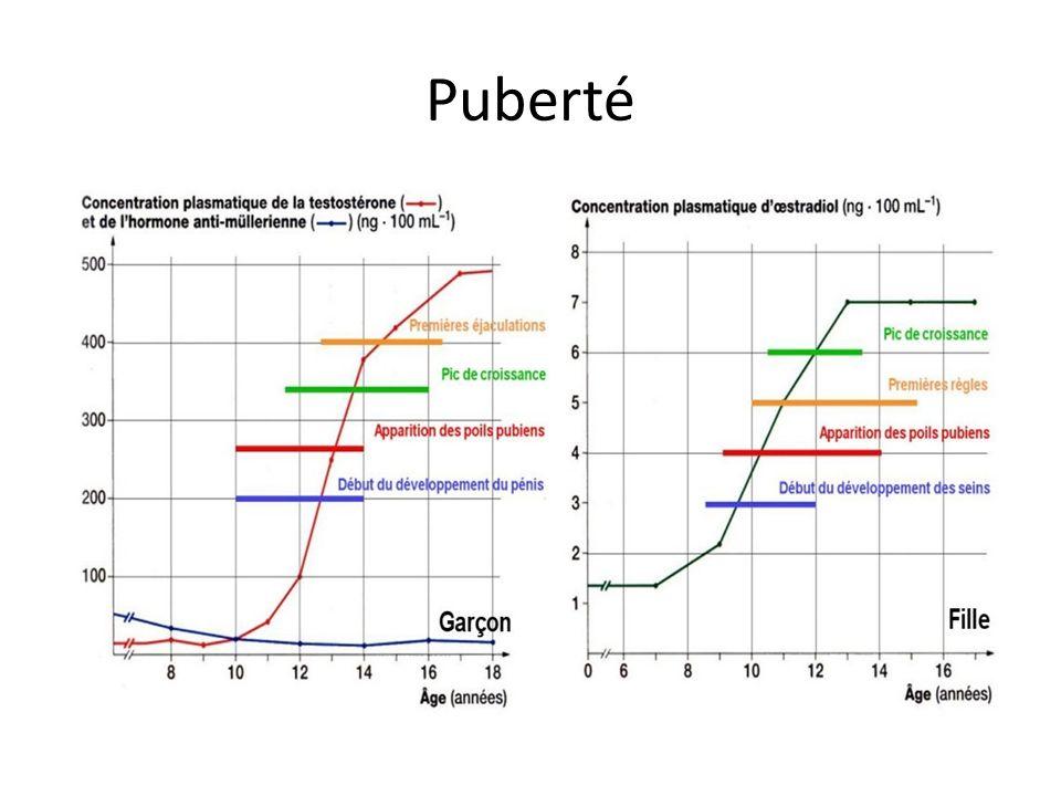 Puberté