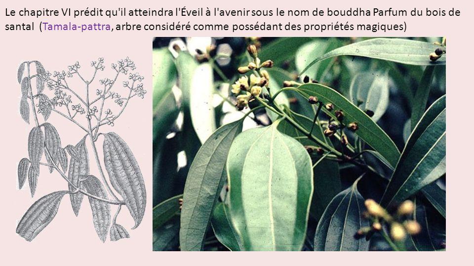 Le chapitre VI prédit qu'il atteindra l'Éveil à l'avenir sous le nom de bouddha Parfum du bois de santal (Tamala-pattra, arbre considéré comme posséda