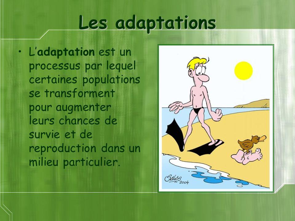 Les adaptations Ladaptation est un processus par lequel certaines populations se transforment pour augmenter leurs chances de survie et de reproduction dans un milieu particulier.