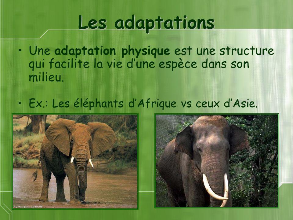 Les adaptations Une adaptation physique est une structure qui facilite la vie dune espèce dans son milieu. Ex.: Les éléphants dAfrique vs ceux dAsie.
