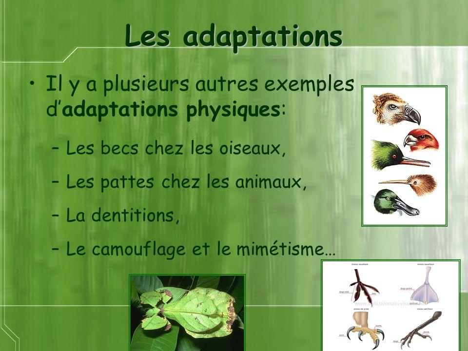 Les adaptations Il y a plusieurs autres exemples dadaptations physiques: –Les becs chez les oiseaux, –Les pattes chez les animaux, –La dentitions, –Le camouflage et le mimétisme…
