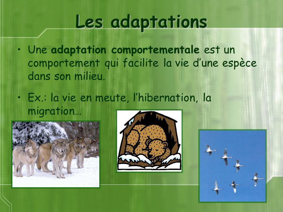 Les adaptations Une adaptation comportementale est un comportement qui facilite la vie dune espèce dans son milieu. Ex.: la vie en meute, lhibernation