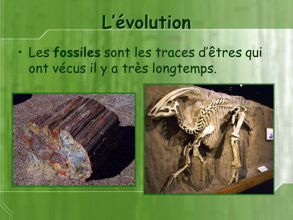 Lévolution Les fossiles sont les traces dêtres qui ont vécus il y a très longtemps.