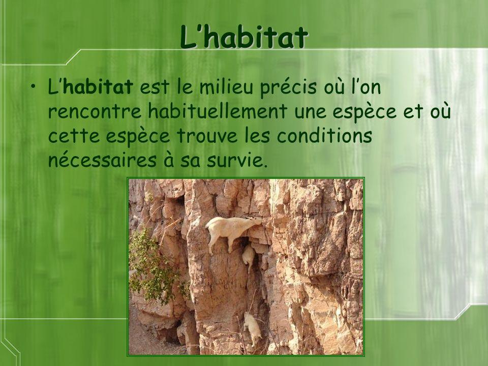 Lhabitat Lhabitat est le milieu précis où lon rencontre habituellement une espèce et où cette espèce trouve les conditions nécessaires à sa survie.