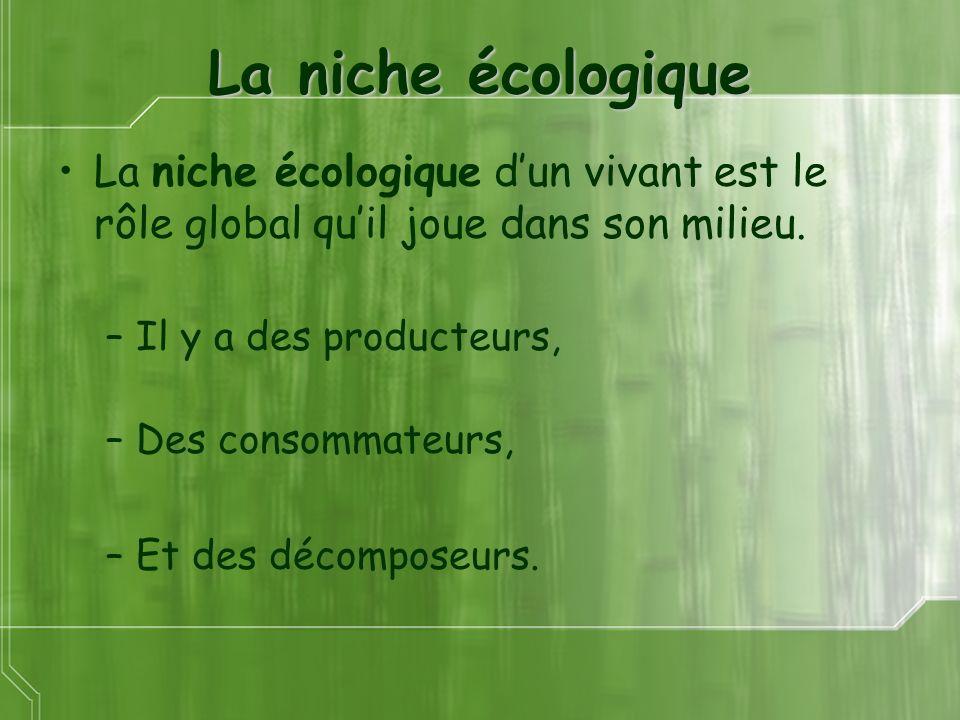 La niche écologique La niche écologique dun vivant est le rôle global quil joue dans son milieu. –Il y a des producteurs, –Des consommateurs, –Et des