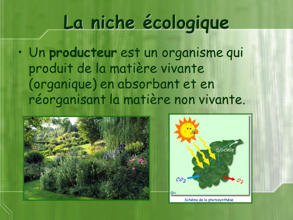 La niche écologique Un producteur est un organisme qui produit de la matière vivante (organique) en absorbant et en réorganisant la matière non vivante.