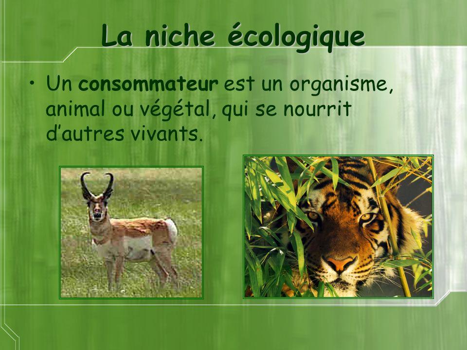 La niche écologique Un consommateur est un organisme, animal ou végétal, qui se nourrit dautres vivants.