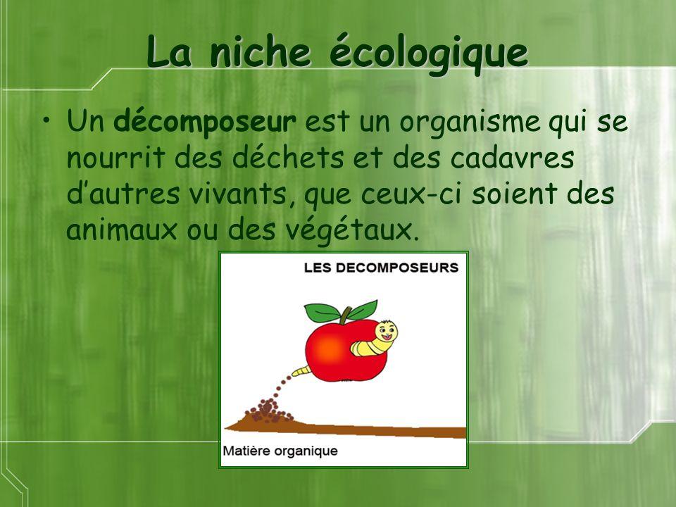 La niche écologique Un décomposeur est un organisme qui se nourrit des déchets et des cadavres dautres vivants, que ceux-ci soient des animaux ou des végétaux.