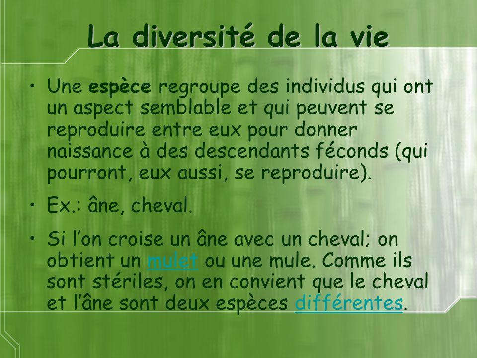 La diversité de la vie Une espèce regroupe des individus qui ont un aspect semblable et qui peuvent se reproduire entre eux pour donner naissance à de