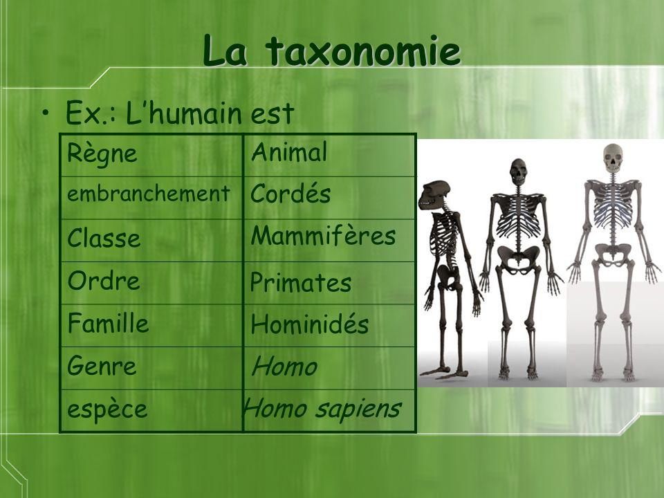 La taxonomie Ex.: Lhumain est Animal Cordés Mammifères Primates Homo Hominidés Homo sapiens Règne embranchement Classe Ordre Famille Genre espèce