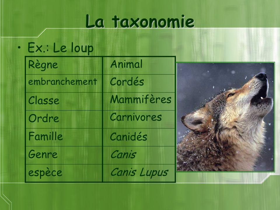 La taxonomie Ex.: Le loup Animal Cordés Mammifères Carnivores Canis Canidés Canis Lupus Règne embranchement Classe Ordre Famille Genre espèce