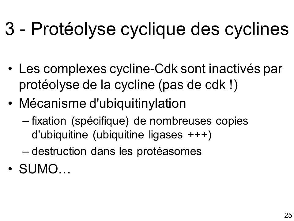 25 3 - Protéolyse cyclique des cyclines Les complexes cycline-Cdk sont inactivés par protéolyse de la cycline (pas de cdk !) Mécanisme d'ubiquitinylat