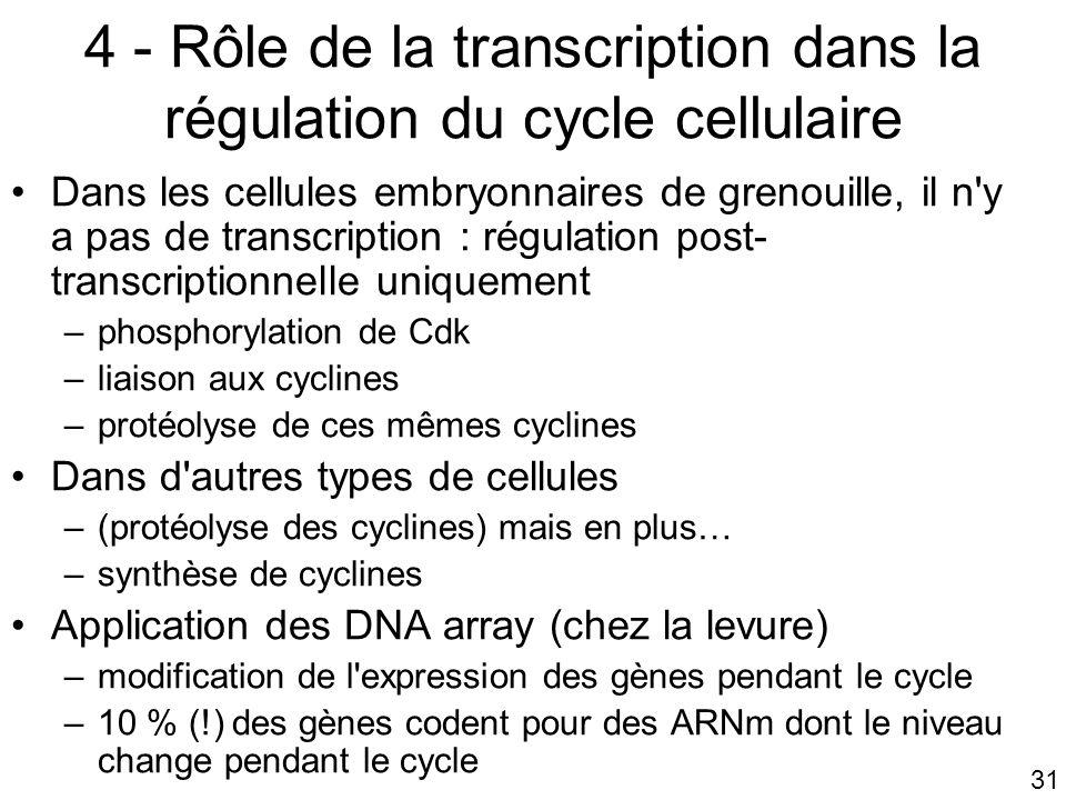 31 4 - Rôle de la transcription dans la régulation du cycle cellulaire Dans les cellules embryonnaires de grenouille, il n'y a pas de transcription :