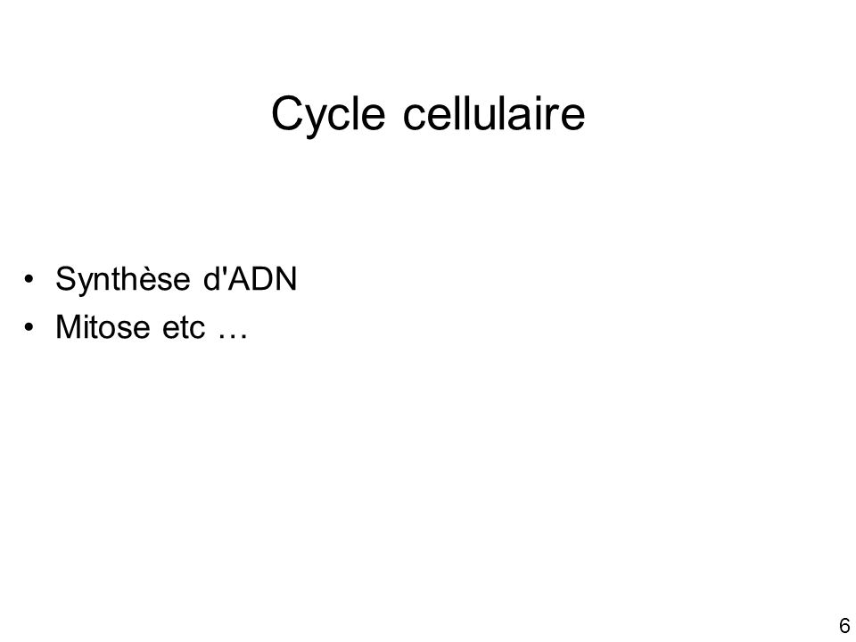 6 Cycle cellulaire Synthèse d'ADN Mitose etc …