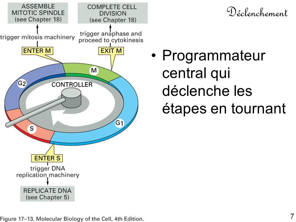 8 Composants du système de contrôle Une horloge fixant la durée de chaque étape Un mécanisme pour déclencher les étapes dans le bon ordre Un mécanisme pour que chaque étape ne survienne qu une seule fois Chaque étape réalisée entièrement et de façon irréversible Robustesse du mécanisme même si la cellule est en difficulté Adaptabilité à l environnement