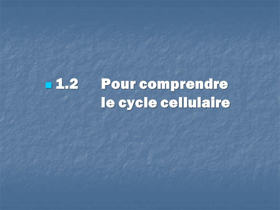 1.2 Pour comprendre le cycle cellulaire 1.2 Pour comprendre le cycle cellulaire