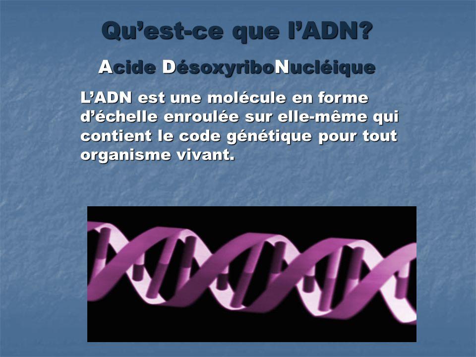 Quest-ce que lADN? Acide DésoxyriboNucléique LADN est une molécule en forme déchelle enroulée sur elle-même qui contient le code génétique pour tout o