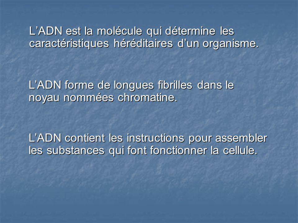 LADN est la molécule qui détermine les caractéristiques héréditaires dun organisme. LADN contient les instructions pour assembler les substances qui f