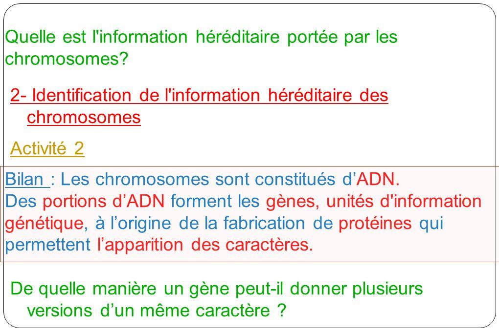 Quelle est l'information héréditaire portée par les chromosomes? 2- Identification de l'information héréditaire des chromosomes Activité 2 Bilan : Les