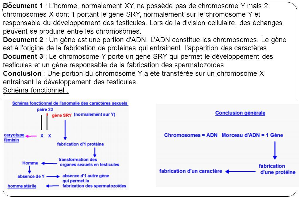 Document 1 : Lhomme, normalement XY, ne possède pas de chromosome Y mais 2 chromosomes X dont 1 portant le gène SRY, normalement sur le chromosome Y et responsable du développement des testicules.