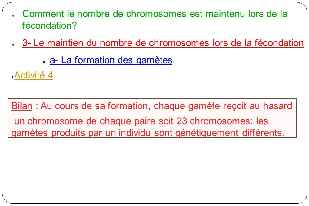 Comment le nombre de chromosomes est maintenu lors de la fécondation? 3- Le maintien du nombre de chromosomes lors de la fécondation a- La formation d