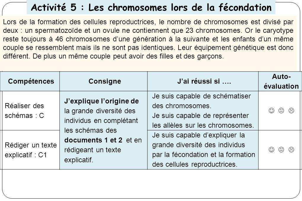 Activité 5 : Les chromosomes lors de la fécondation Lors de la formation des cellules reproductrices, le nombre de chromosomes est divisé par deux : un spermatozoïde et un ovule ne contiennent que 23 chromosomes.