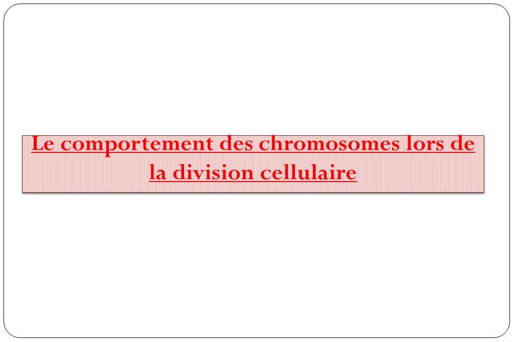 à 46 chromosomes à 23 chromosomes 1 ère division D 2 ème division D : Duplication