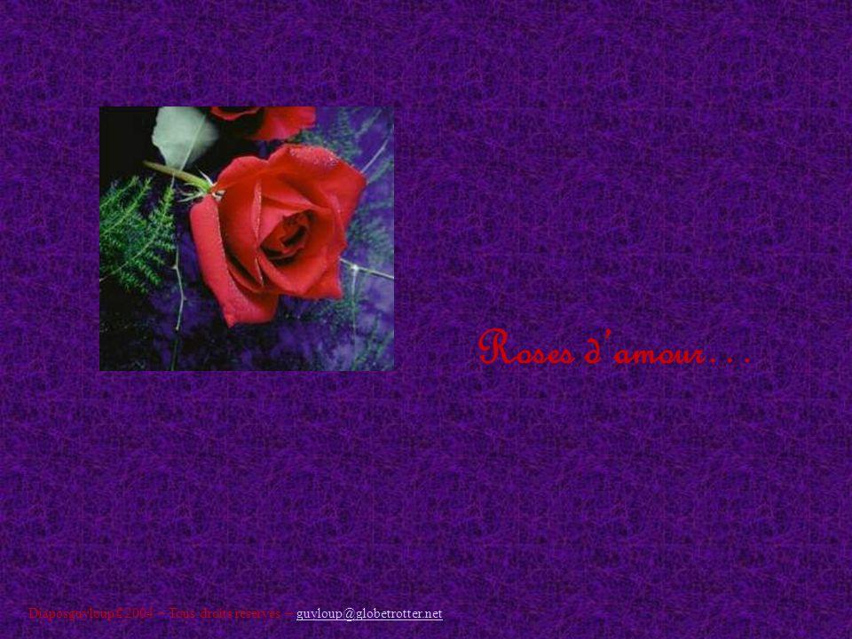 Roses damour… Diaposguyloup©2004 – Tous droits réservés – guyloup@globetrotter.netguyloup@globetrotter.net