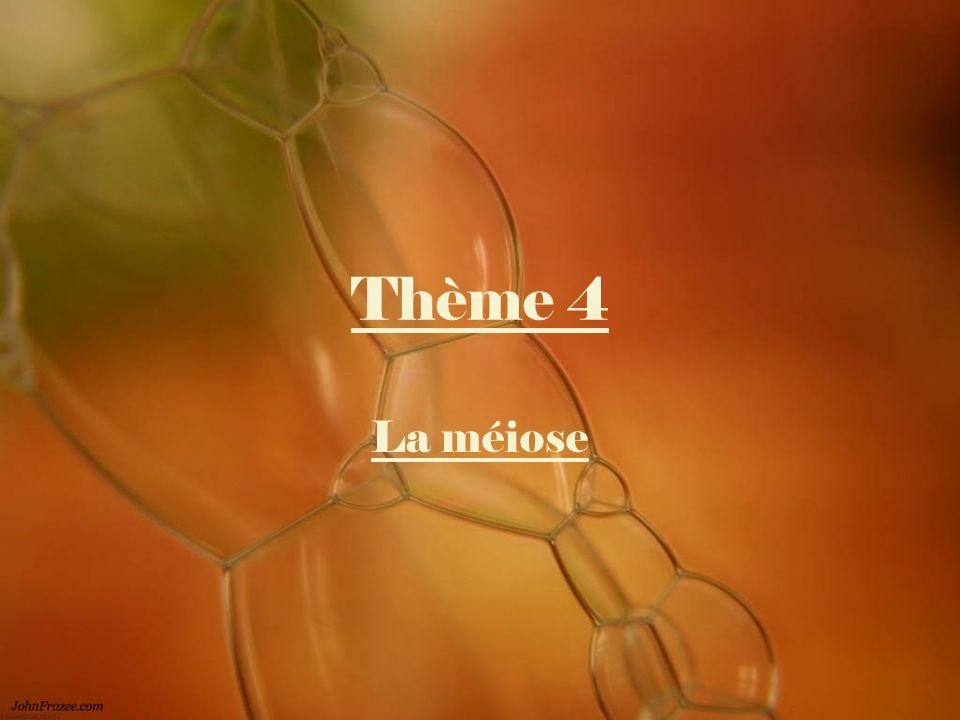 Thème 4 La méiose