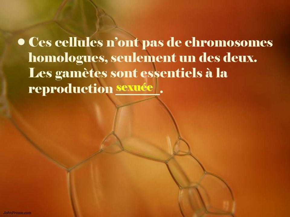 Ces cellules nont pas de chromosomes homologues, seulement un des deux. Les gamètes sont essentiels à la reproduction _______. sexuée