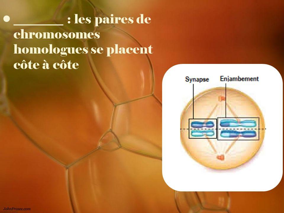 ________ : les paires de chromosomes homologues se placent côte à côte
