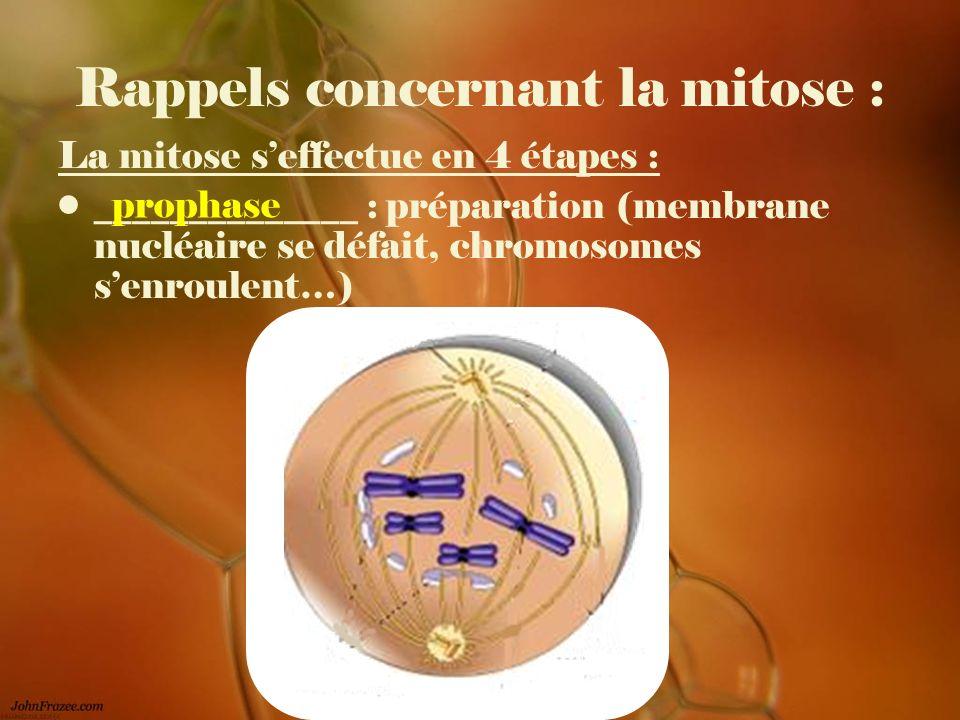 Rappels concernant la mitose : La mitose seffectue en 4 étapes : ______________ : tous les chromosomes (homologues aussi) se mettent en UNE ligne de 46 métaphase
