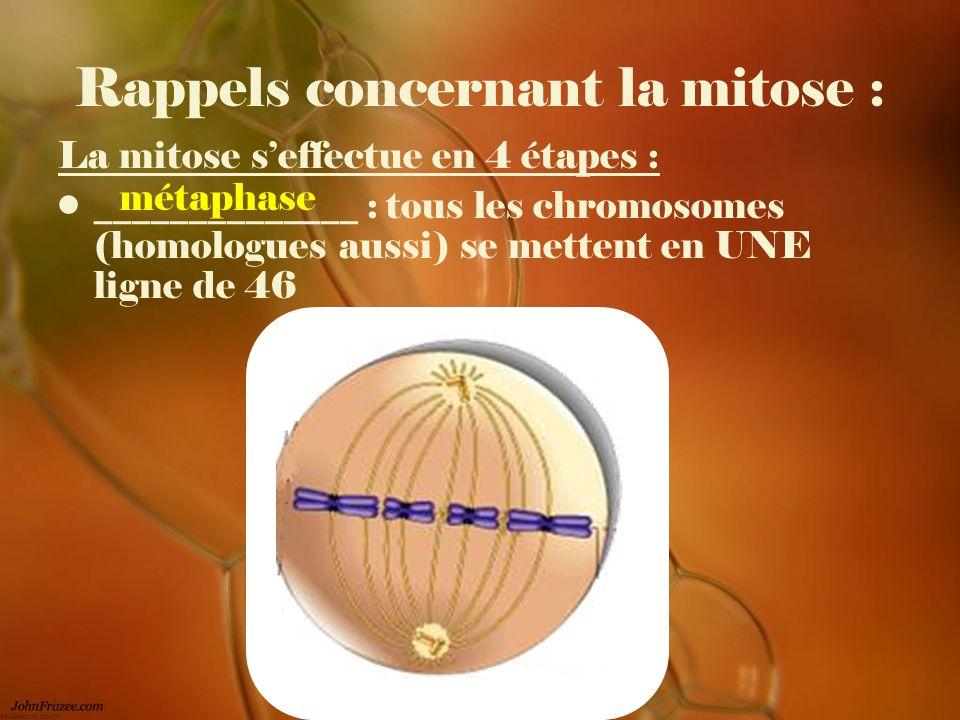 Rappels concernant la mitose : La mitose seffectue en 4 étapes : ______________ : tous les chromosomes (homologues aussi) se mettent en UNE ligne de 4