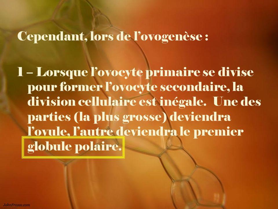Cependant, lors de lovogenèse : 1 – Lorsque lovocyte primaire se divise pour former lovocyte secondaire, la division cellulaire est inégale. Une des p