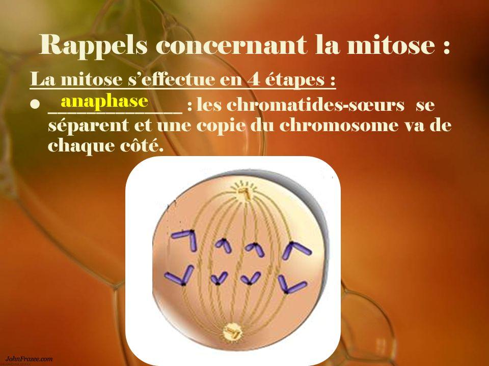 Rappels concernant la mitose : La mitose seffectue en 4 étapes : ______________ : les chromatides-sœurs se séparent et une copie du chromosome va de c