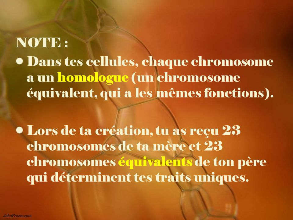 NOTE : Dans tes cellules, chaque chromosome a un homologue (un chromosome équivalent, qui a les mêmes fonctions). Lors de ta création, tu as reçu 23 c