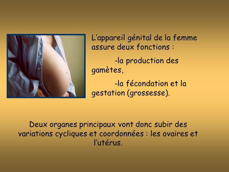 Lappareil génital de la femme assure deux fonctions : -la production des gamètes, -la fécondation et la gestation (grossesse).