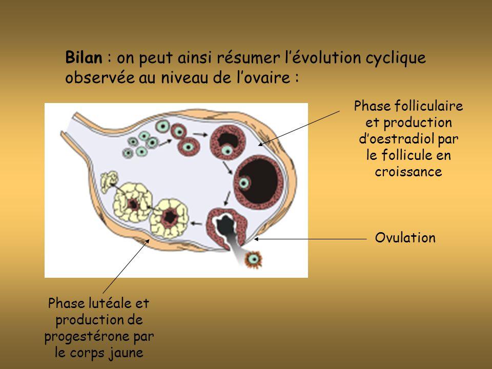 En principe, au cours dun cycle, un seul ovaire produit un seul ovule (la maturation dun follicule « bloque » celle des autres.) Exceptionnellement, il peut y avoir au cours dun cycle plusieurs follicules arrivant à maturité : il y aura donc plusieurs ovules et possibilité de plusieurs fécondations par des spermatozoïdes différents la grossesse donnera des « faux jumeaux » (non semblables = dizygotes) ou des triplés, des quadruplés….