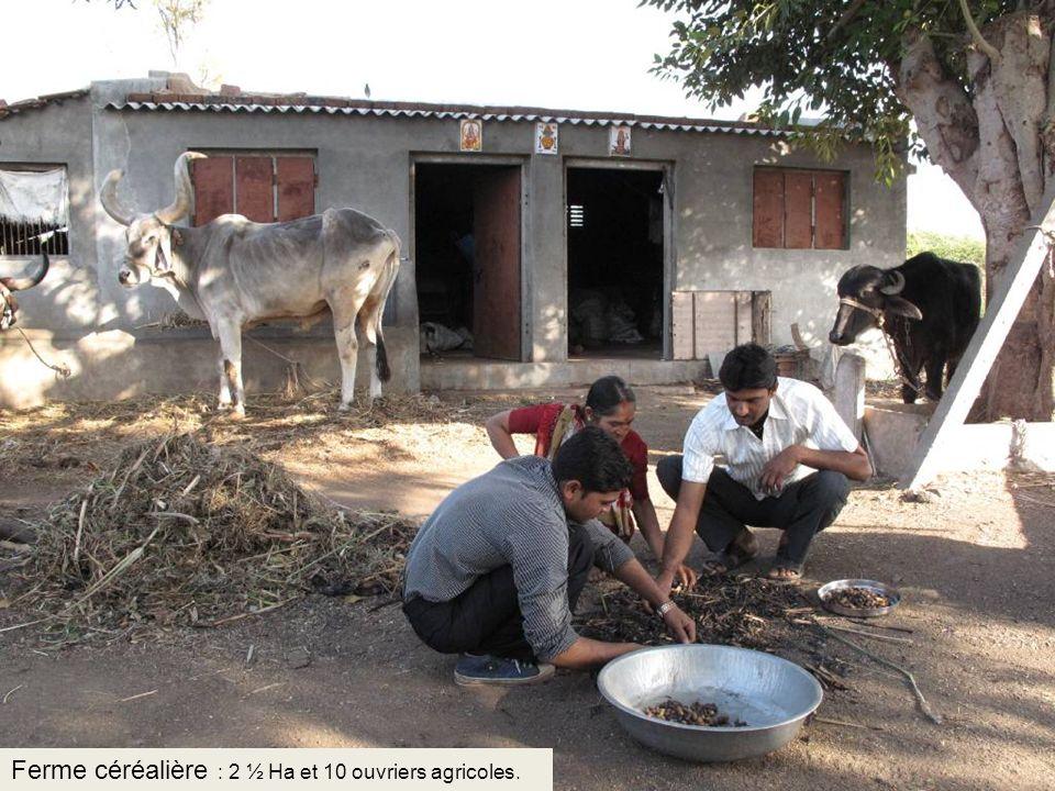 Ferme céréalière : 2 ½ Ha et 10 ouvriers agricoles.