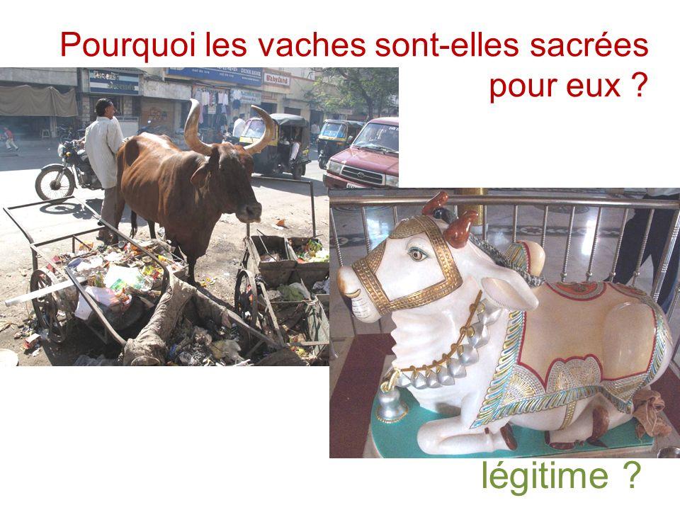 Pourquoi les vaches sont-elles sacrées pour eux légitime