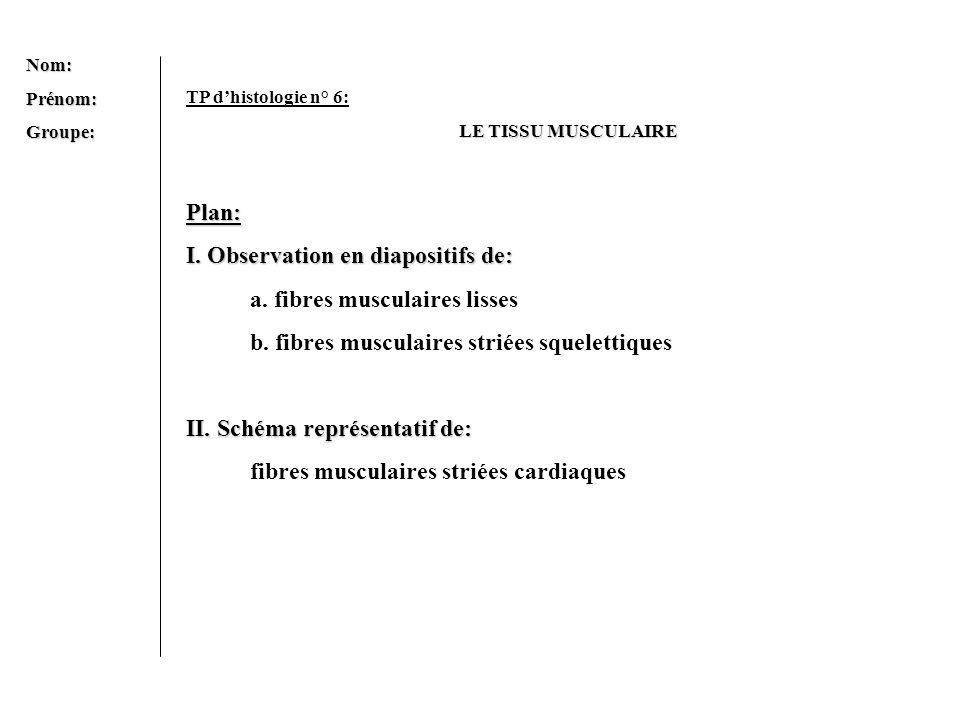 Nom:Prénom:Groupe: TP dhistologie n° 6: LE TISSU MUSCULAIRE Plan: I. Observation en diapositifs de: a. fibres musculaires lisses b. fibres musculaires