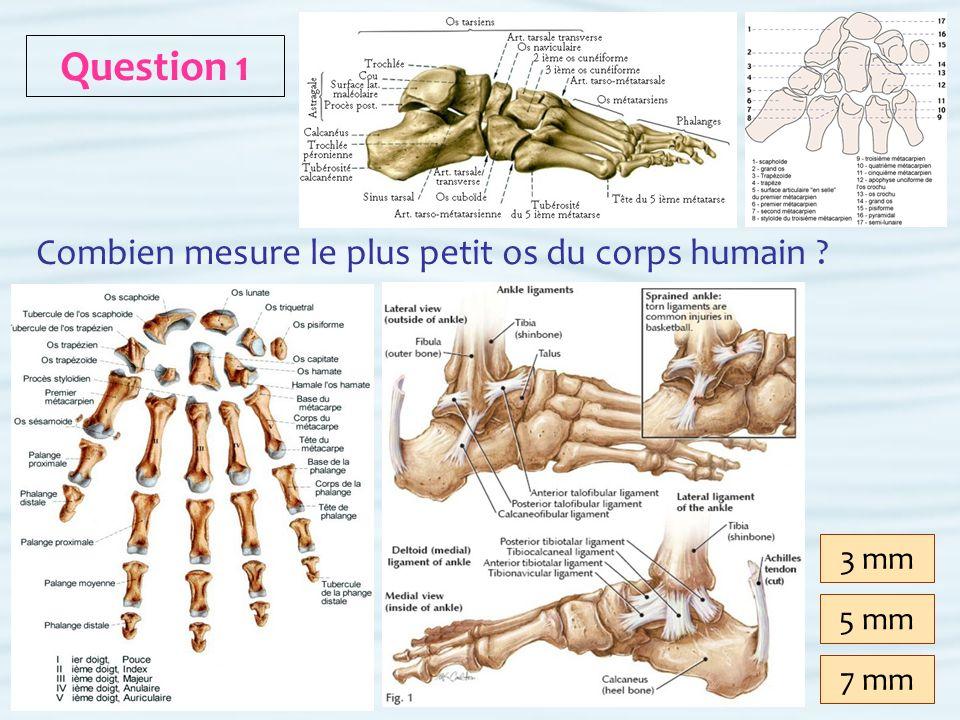 3 mm 1 Cliquer ici pour continuer EXACT Combien mesure le plus petit os du corps humain .