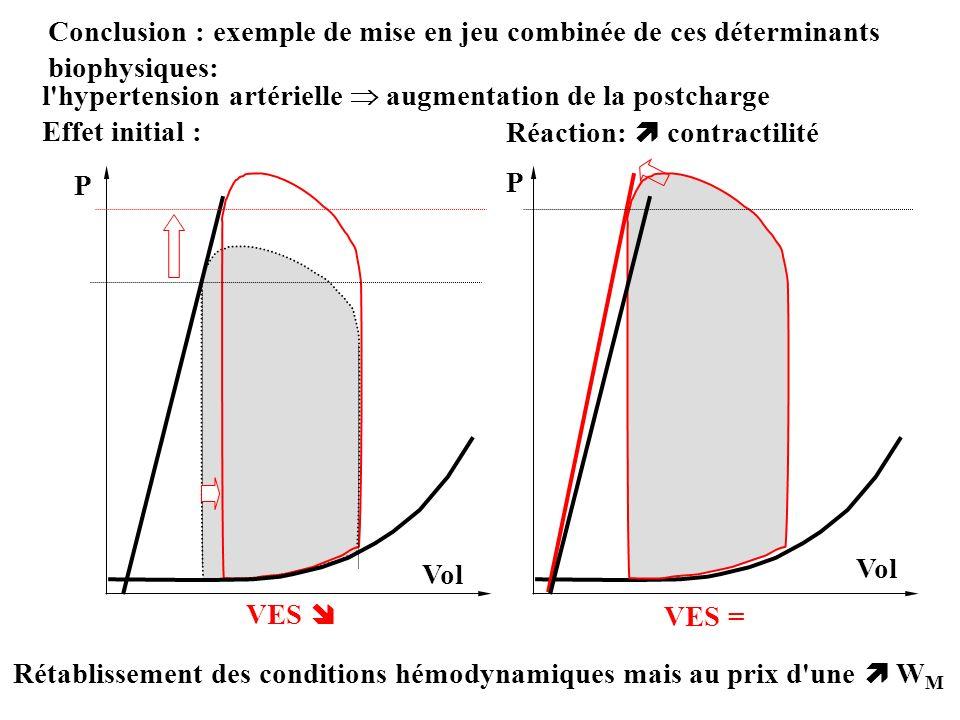 Conclusion : exemple de mise en jeu combinée de ces déterminants biophysiques: l'hypertension artérielle augmentation de la postcharge Effet initial :
