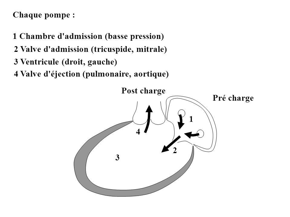 Chaque pompe : 1 Chambre d'admission (basse pression) Pré charge 1 Post charge 2 2 Valve d'admission (tricuspide, mitrale) 3 3 Ventricule (droit, gauc