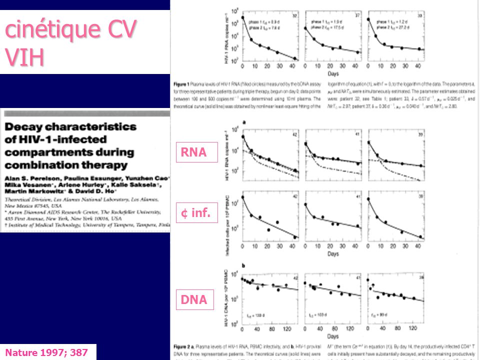 cinétique CV 1 ère phase: 2 premières semaines: 1 ère phase: 2 premières semaines: diminution / CV initiale denviron 2 log (99%) correspondant à lélimination des virus libres (1/2 vie <6h) et des cellules infectées productrices (1/2 vie 1,6 jours) diminution / CV initiale denviron 2 log (99%) correspondant à lélimination des virus libres (1/2 vie <6h) et des cellules infectées productrices (1/2 vie 1,6 jours) 2 nde phase: 2 nde phase: cellules infectées à vie longue: macrophages, monocytes, cellules folliculaires dendritiques (FDC) des tissus lymphoïdes cellules infectées à vie longue: macrophages, monocytes, cellules folliculaires dendritiques (FDC) des tissus lymphoïdes activation des CD4 « infectés latents » activation des CD4 « infectés latents » réservoirs, release virions piégés.