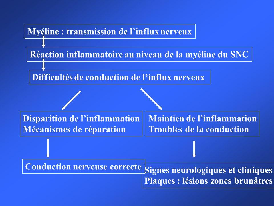 Myéline : transmission de linflux nerveux Réaction inflammatoire au niveau de la myéline du SNC Difficultés de conduction de linflux nerveux Dispariti