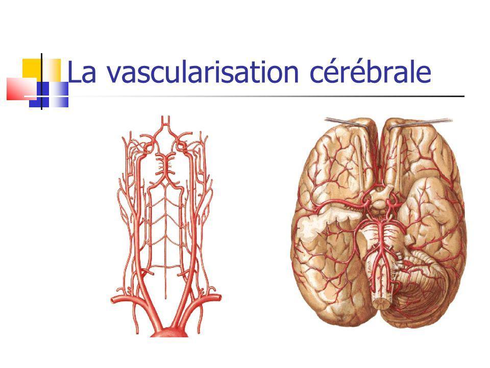 La vascularisation cérébrale
