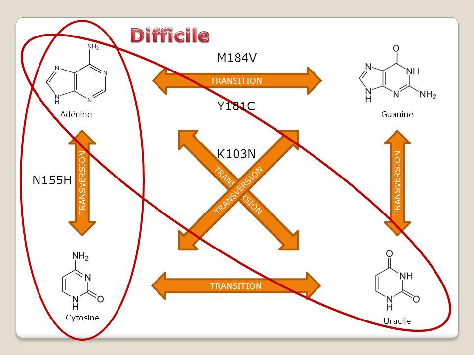 Guanine Uracile Adénine TRANSITION TRANSVERSION K103N Cytosine N155H M184V Y181C
